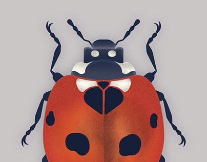 Coccinellidae-ladybug