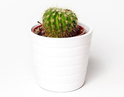 Plants online store