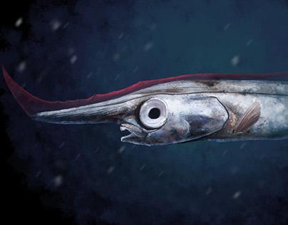 A bare-bones look at bizarre fish