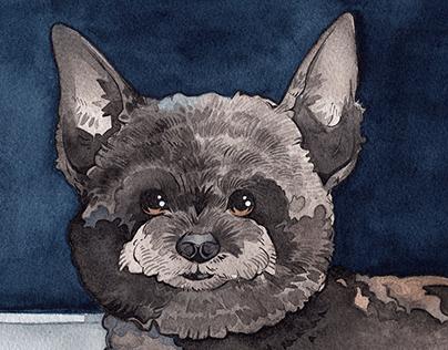 Watercolour Animal Portraits