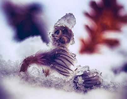 in the frost