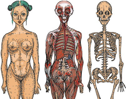 THE ANATOMICAL FEMALE illustrated anatomy book