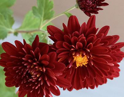 Flowers 01.