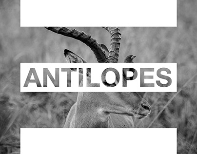 Antilopes of Tanzania