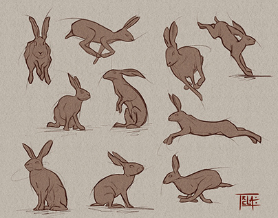 Bunnies Study