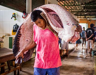 amazonas market tabatinga,  pirarucu's end