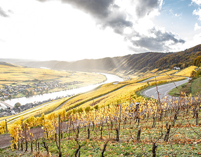 Moselle loops in autumn