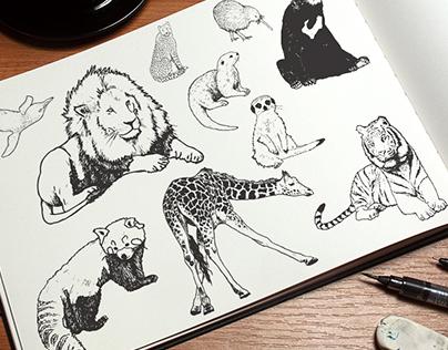 Animal Illustrations for Wellington Zoo