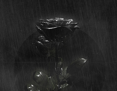 Light & Rain
