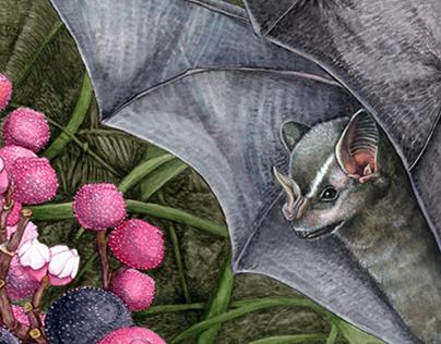 Frugivorous Bats from Veracruz, Mexico