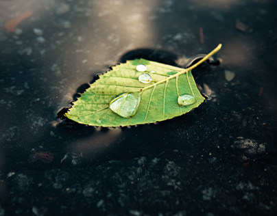 A Leaf With Weight