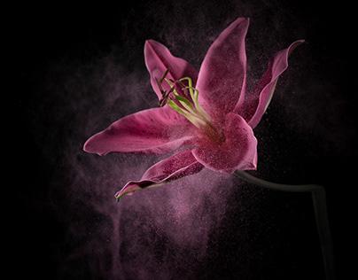 FlowerPower II