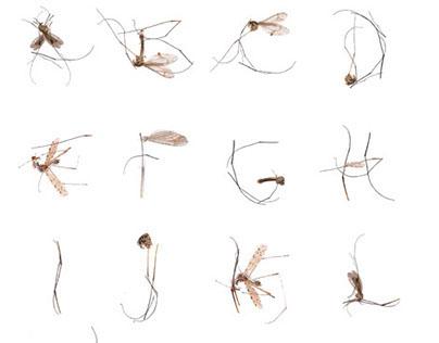 Mosquitos Typeface