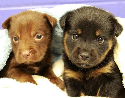 Pet Fostering at Elmhurst Animal Care Center