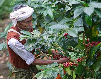 Coffea Arabica aka Arabian Coffee