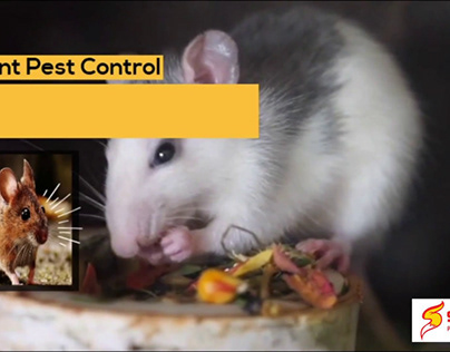 Locally Owned Ant Pest Control Service in Brisbane