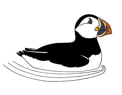 UK Red List Birds - Water Birds
