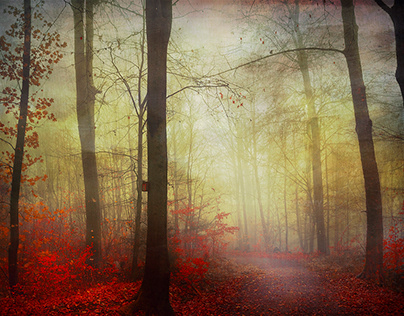 Herbstmorgen - Fall Mornings