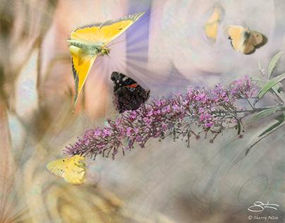 Artful Butterflies