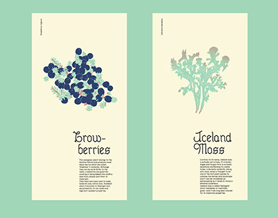 Plants in Iceland