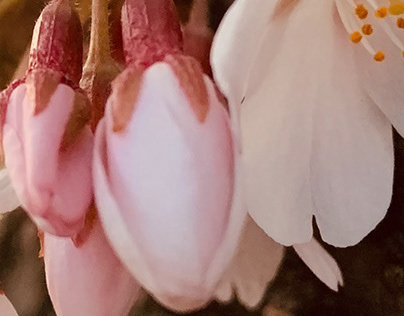 Bloomin Spring 1