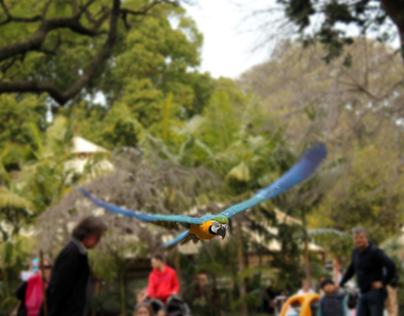 Parrot in flight photo