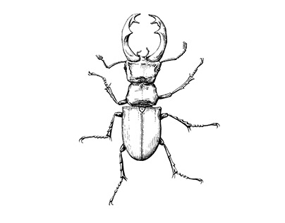 Stag beetle for tattoo