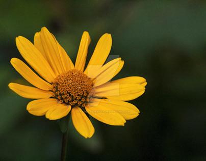 Flowers photo series