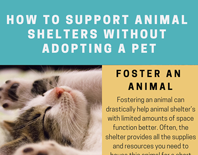How to Support Animal Shelters Without Adopting a Pet