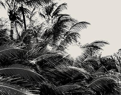BAHIA BEACH RESORTS & RESIDENCES