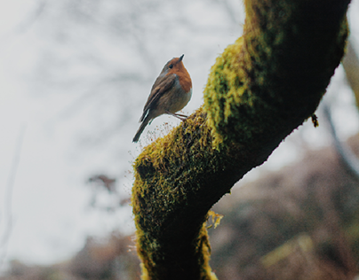 Lake District UK : Nature Photography