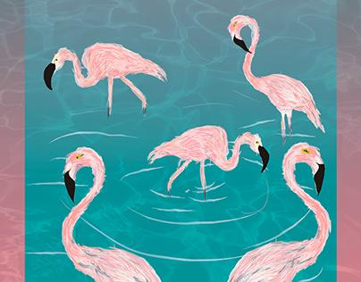 Flamingos - iustra scipião