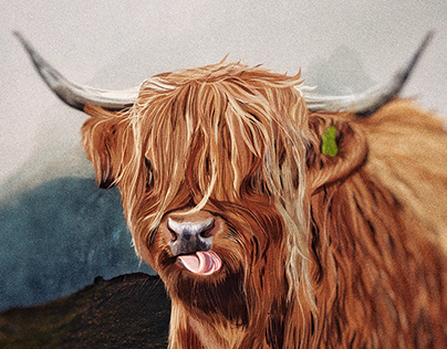 Illustration: Highland cow
