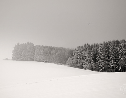 Woods in Winter Landscape