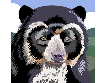 Oso de Anteojos - Ilustración vectorial