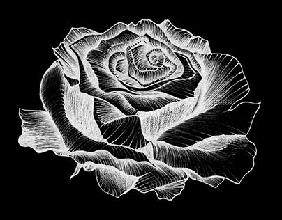 El nombre de la rosa. Book cover