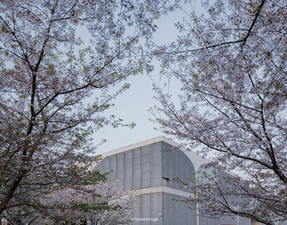 Cheery Blossom+Long Museum   ShanghaiArchStory