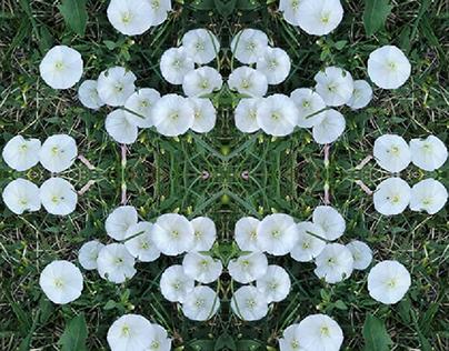 :White flower: photo-collage, 2019