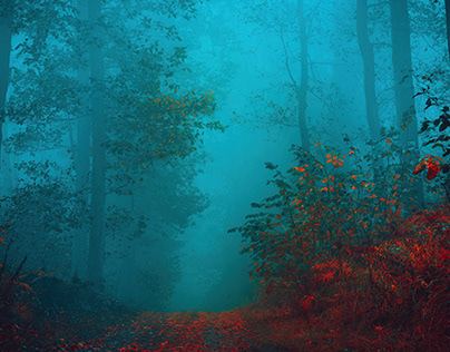 Walk in the misty forest