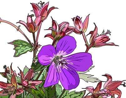 Wildflowers of Sierra Nevada