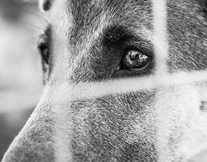 Social Project. Dog shelter
