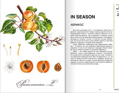 Botanical Illustration for HonestFood magazin