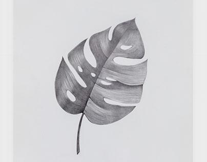 A Split Leaf
