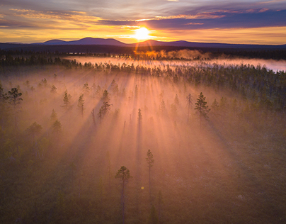 Misty forests of Lapland