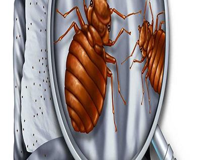 Beg Bug Exterminator Near Me Services