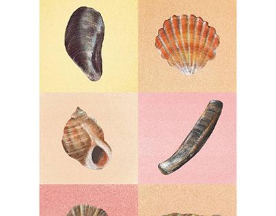 Sunday Seashells 🐚