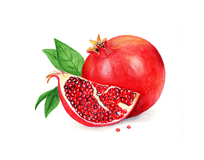 Pomegranate Illustration in watercolors