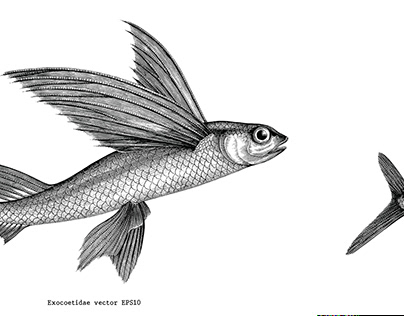Vintage illustration of sea fish