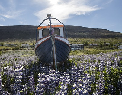Adventures in the West Fjords of Iceland