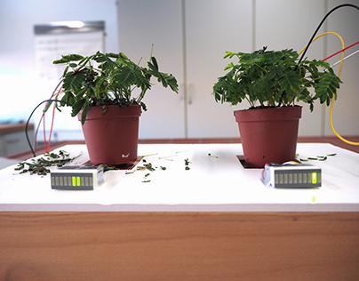 Mimosa Experiment – Prototype